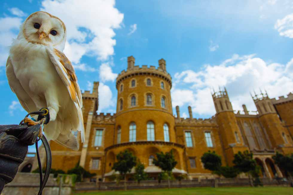Belvoir Castle guest