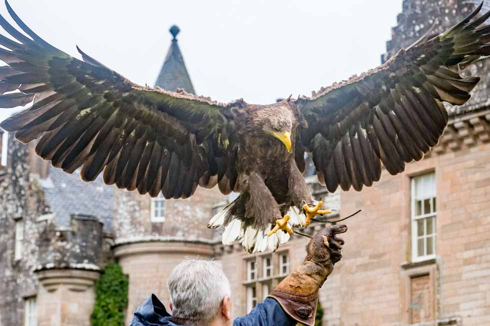 Photo of falconry at Glenapp Castle
