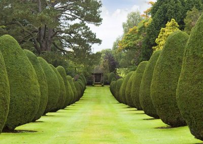 Photo of the Yew Tree avenue at The Elvetham