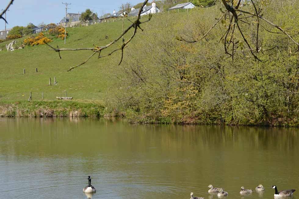 Photo of Tregulland Retreats lake and ducks!